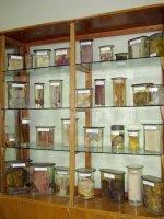 Патологоанатомічний музей