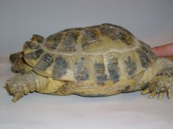 Хвороби черепах