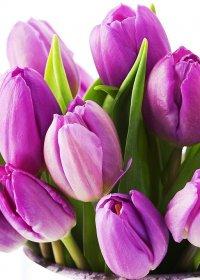 Привітання з міжнародним жіночим днем 8 березня